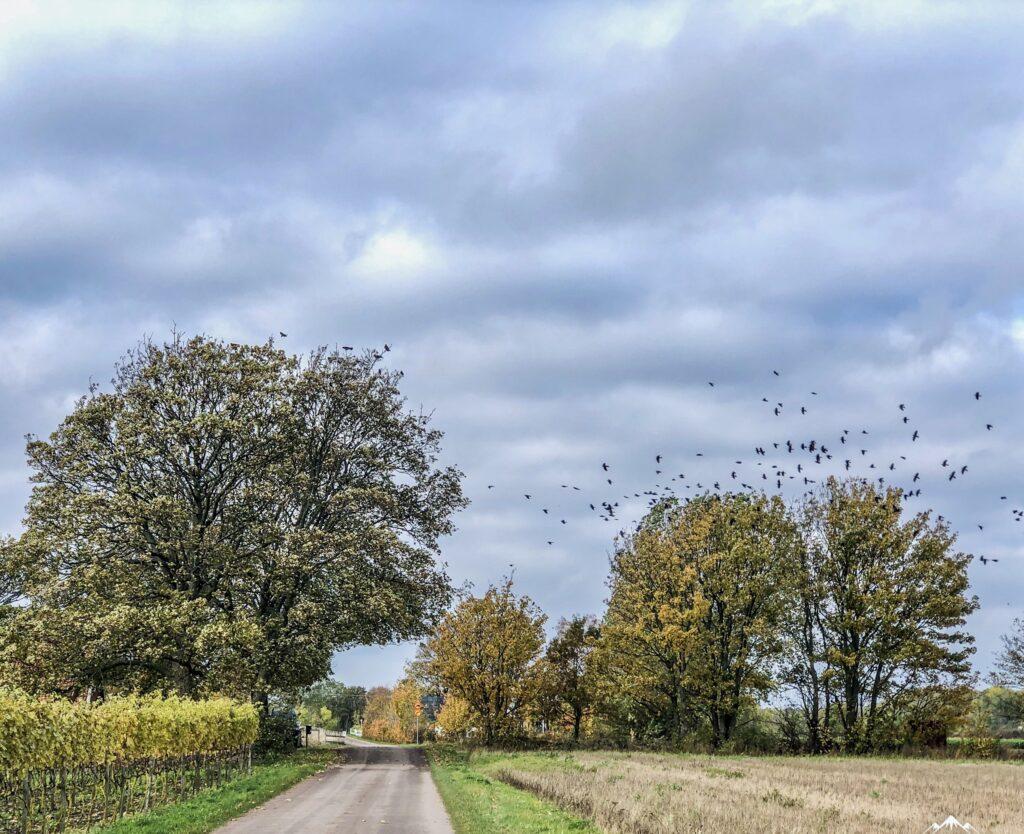 Träd med fåglar