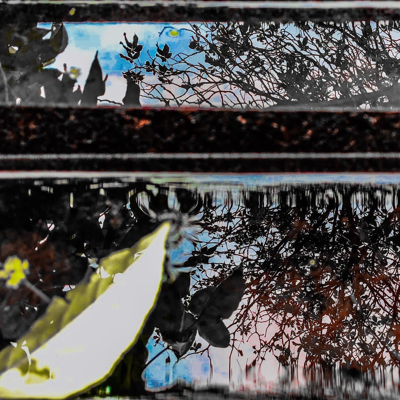Speglingar i vattenkärl